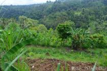 Desirable valley view land for sale in Payangan