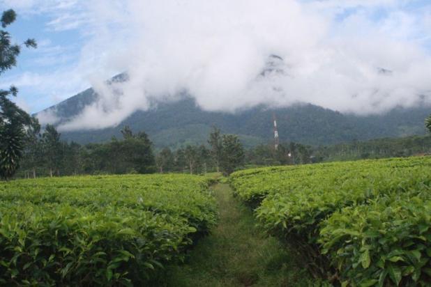 Investasi Kavling Villa Puncak Cipanas, berada dikawasan kebun teh Gedeh 16225319