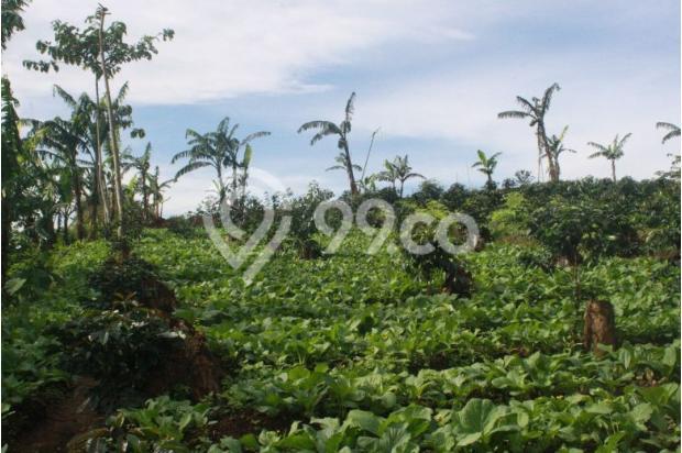 Investasi Kavling Villa Puncak Cipanas, berada dikawasan kebun teh Gedeh 16225322