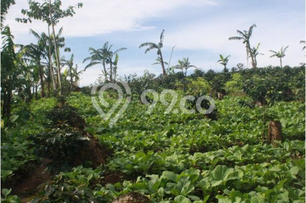 Investasi Kavling Villa Puncak Cipanas, berada dikawasan kebun teh Gedeh 16225321