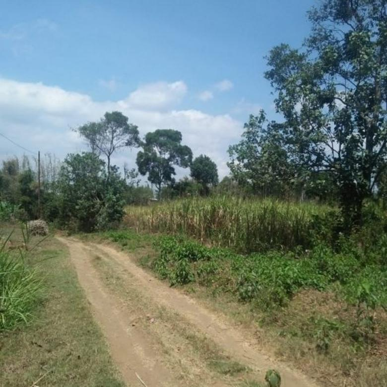 Tanah luas cocok untuk perumahan di Randu Agung Singosari