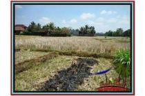 Super Spesial Cantik Tanah 2.000 m2 Sentral di Ubud B524