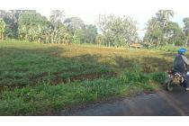 Tanah Murmer di Ciawi Bogor