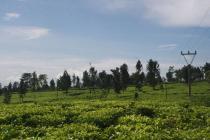 Investasi Masa Depan Tanah Kavling di Kawasan Kebun Teh Gedeh