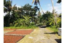 Tanah Kavling Pesona Balian Beach