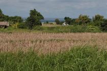 Tanah-Gianyar-6