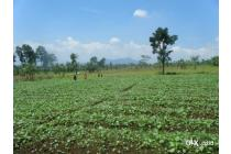 Tanah Subur 8 Ha di Cianjur, SHM, air melimpah dan sudah berpagar keliling