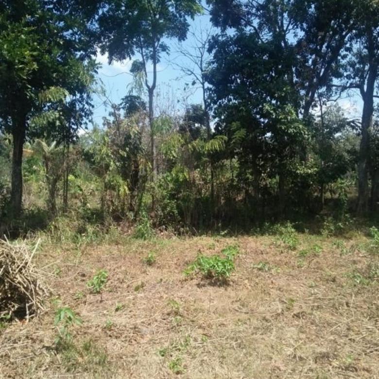 Tanah murah dan luas di Randu Agung Singosari Malang