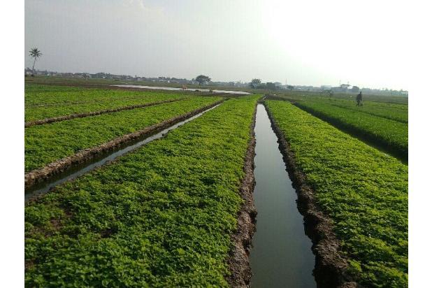 Rp9,72mily Tanah Dijual