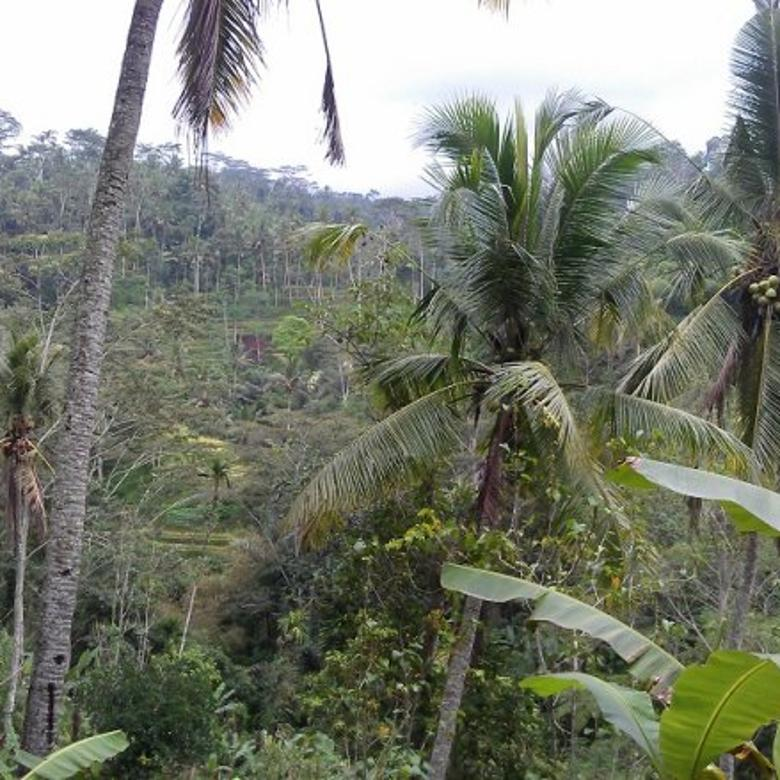 Tanah luas 66.116m2 di Bresela, Ubud