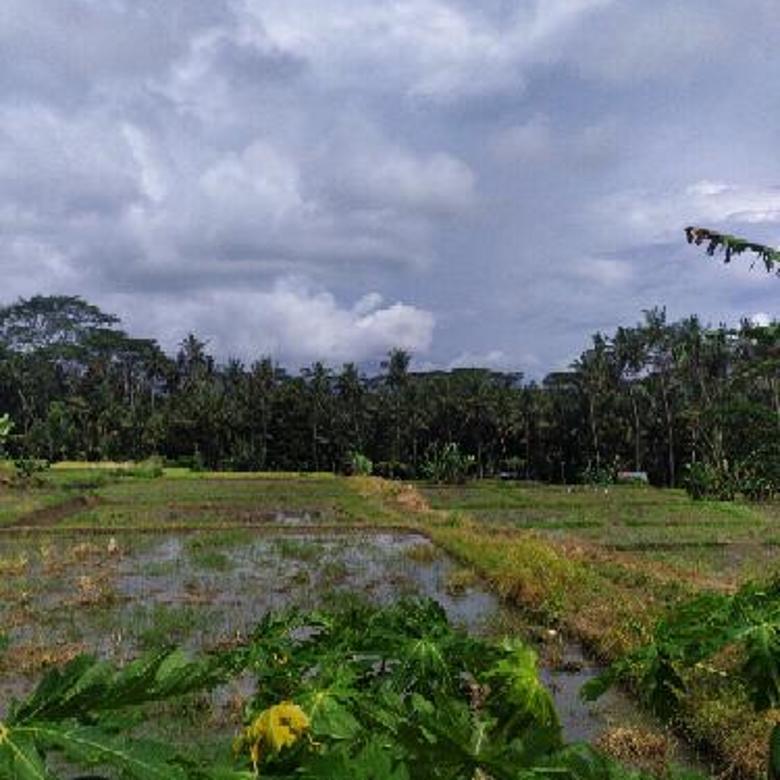 Tanah los sungai view sawah dan jungle