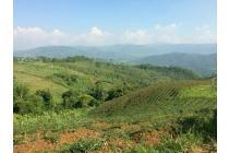 tanah kavling produktif murah bonus pohon kurma