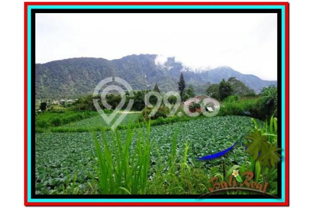 Fantastic, 12.500 m2 view danau buyan dan gunung di Tabanan Bedugul  3873661