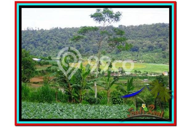 Fantastic, 12.500 m2 view danau buyan dan gunung di Tabanan Bedugul  3873665