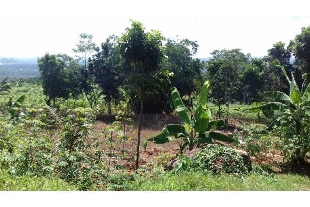 Rp59trily Tanah Dijual