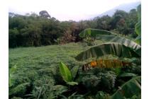 Jual Tanah di Bogor harga murah,| cari tanah di jual di bogor.