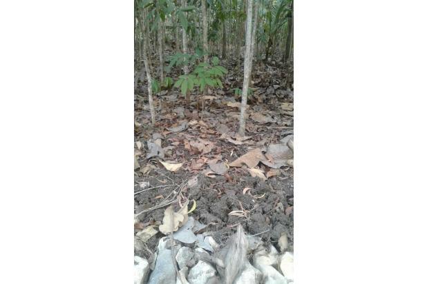 Dijual Tanah Cocok Untuk Investasi Daerah Cermai, Panjatan, Kulon Progo 15830080