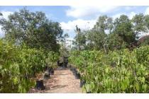 ( BU ) : Tanah Plus Kebun Buah Unggul 2.445m2 Murah Wonogiri