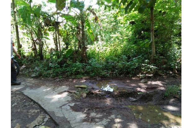 Tanah Murah Dekat Kawasan Industri Daerah Tuksono Sentolo, Kulon Progo 15829807