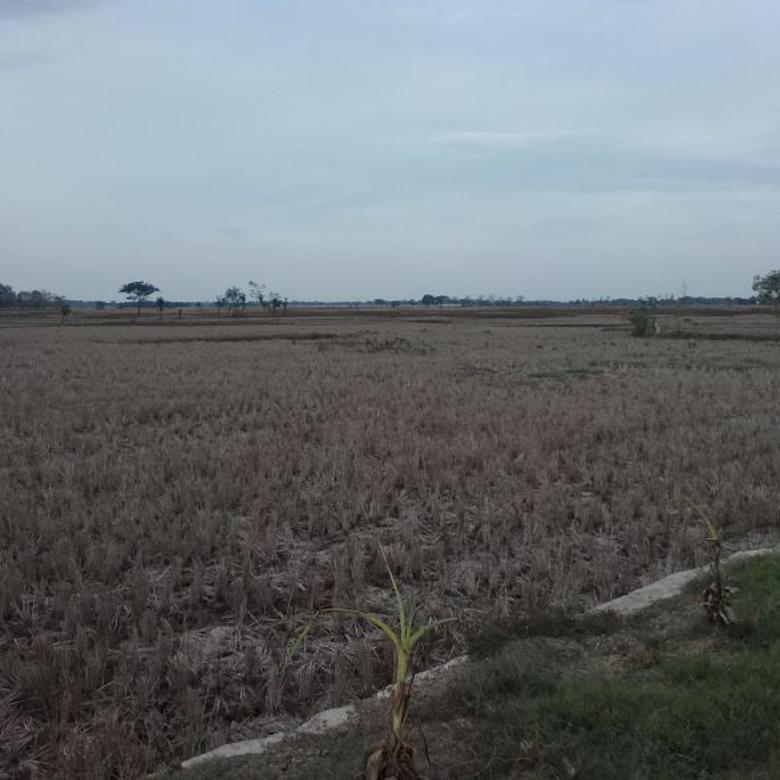 Tanah Strategis Bangun Industri Di Kawasan Ciunagara  80 Rb / M2