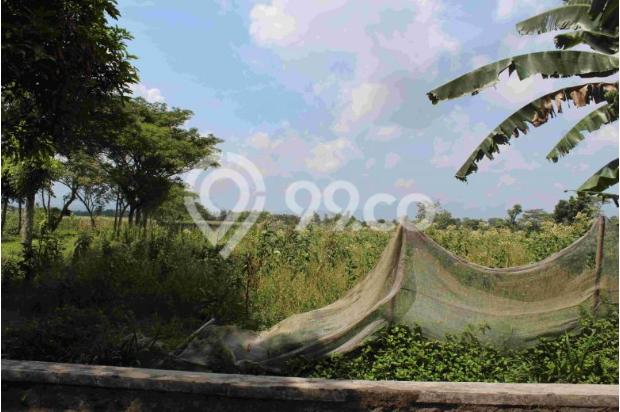 Kapling Prambanan, Ratusan Meter Ke Jl. Solo Km. 15 14371423