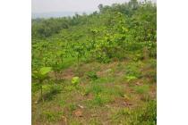 Dijual Tanah Perkebunan di Purwakarta