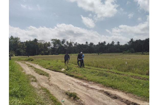 Tanah murah di pejeng , Gianyar ( 16 are )