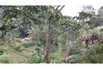Tanah-Bogor-13