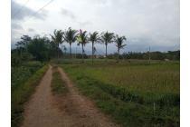 Tanah-Malang-5