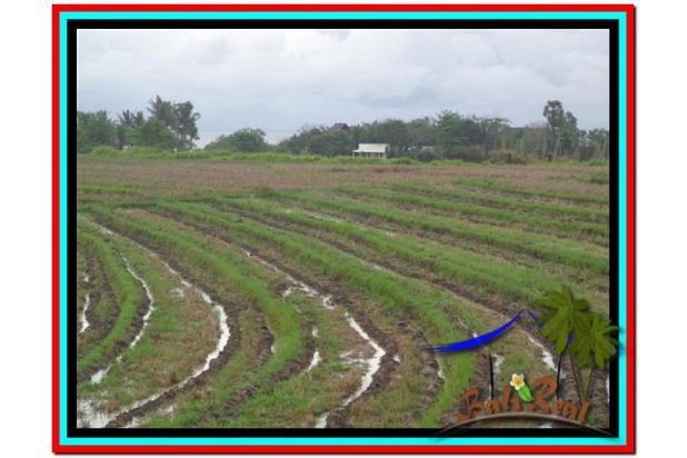 Lokasi Asyik Harga Menarik, 800 m2 View laut, sawah dan gunung di Tabanan 3873824