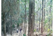 Dijual Perkebunan/Kebun Jati Umur 18 Tahun - Kabupaten Bogor