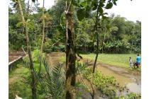 Dijual Tanah di Cibedug, Ciawi, Bogor