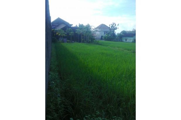 Tanah Dijual Jogja Dekat Jl.Wonosari, Tanah Murah Dekat Komplek Perum 12273199