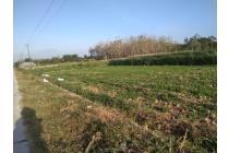 Tanah Zona Kuning Plupuh Sragen