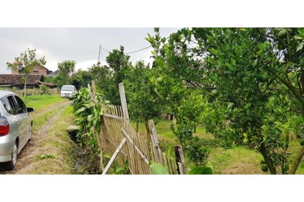 Rp537jt Tanah Dijual