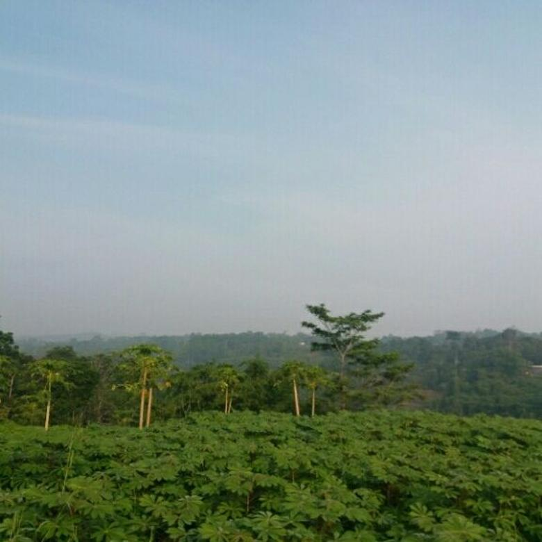 Rumah plus kebun View pegunungan di Ciampea Bogor