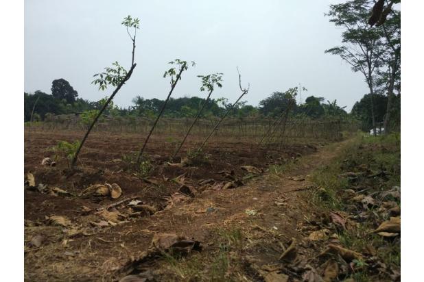 DiJual Tanah Kavling Murah Lokasi Strategis 13245091