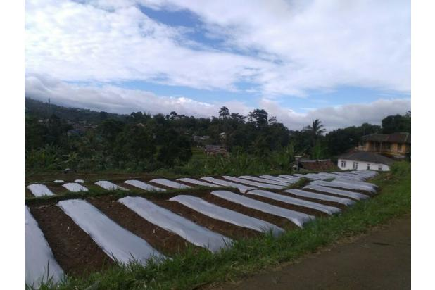 Rp5,2mily Tanah Dijual